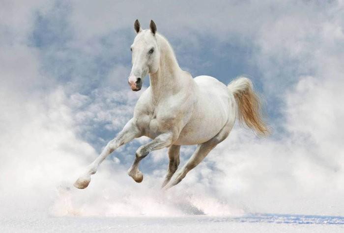 Лошадь-альбинос