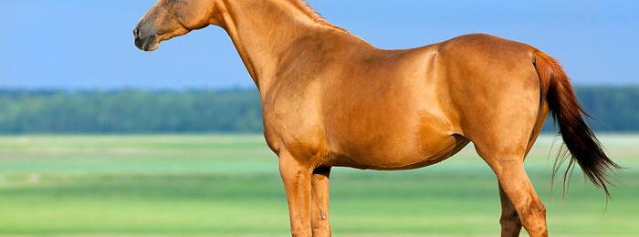 «Огненные» лошади
