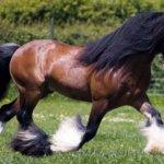 Лошадка Тинкер