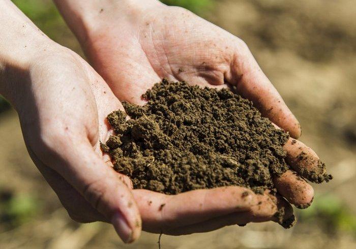 Выбор почвы для посадки капусты