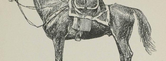 Ногайский конь
