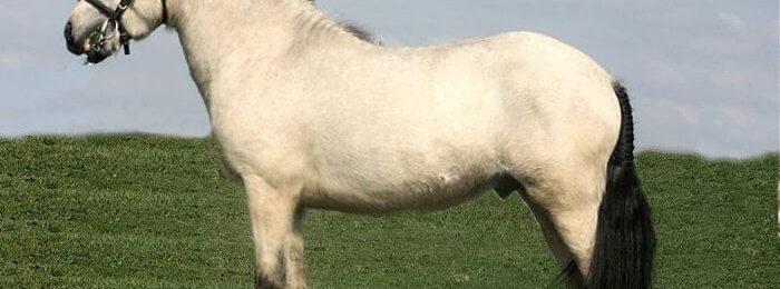 Окрас лошадей сизой масти