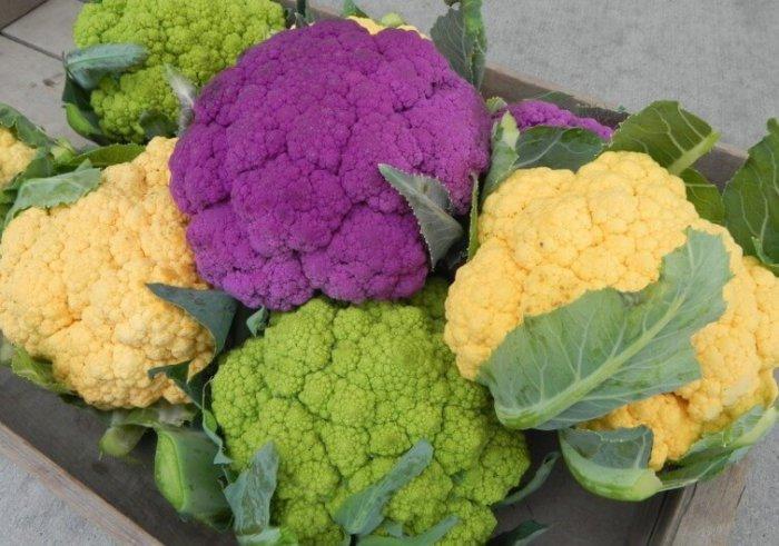 Цветная капуста разных расцветок