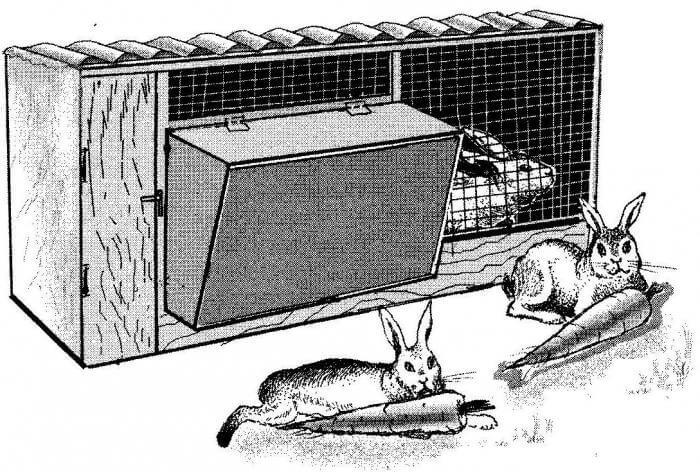 Чертеж крольчатника