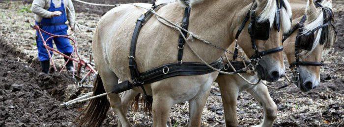Рабочие породы лошадей