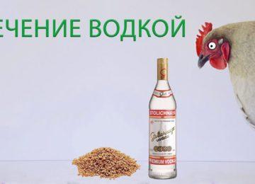 Водка для лечения кур