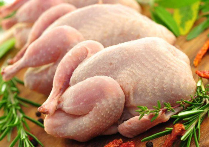 Мясо у птицэтой линии мягкое