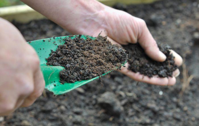 Подкормка грунта для высаживания рассады