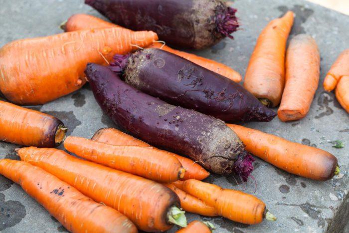 Кормовая свёкла и морковь