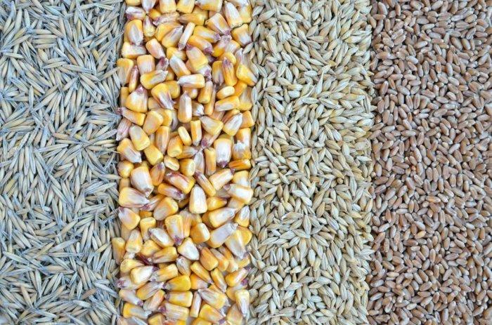 Зерновые: кукуруза, ячмень, пшеница, овес